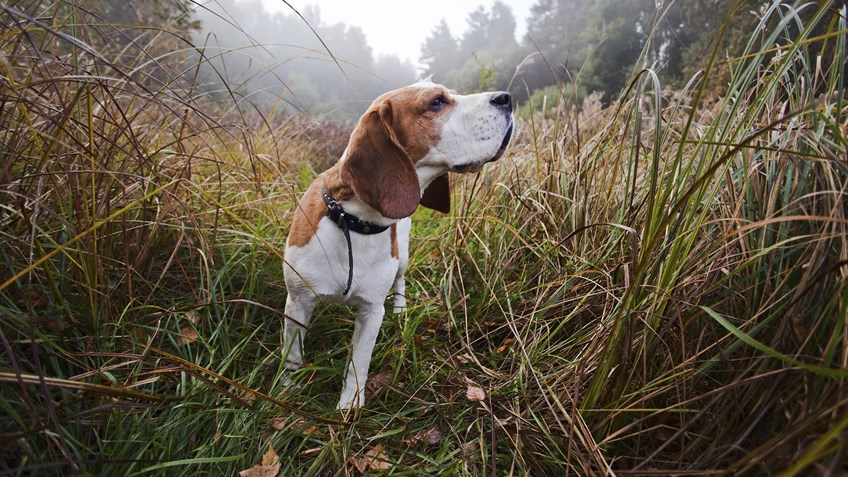 12 Hunting Dogs Guaranteed To Make Your Day