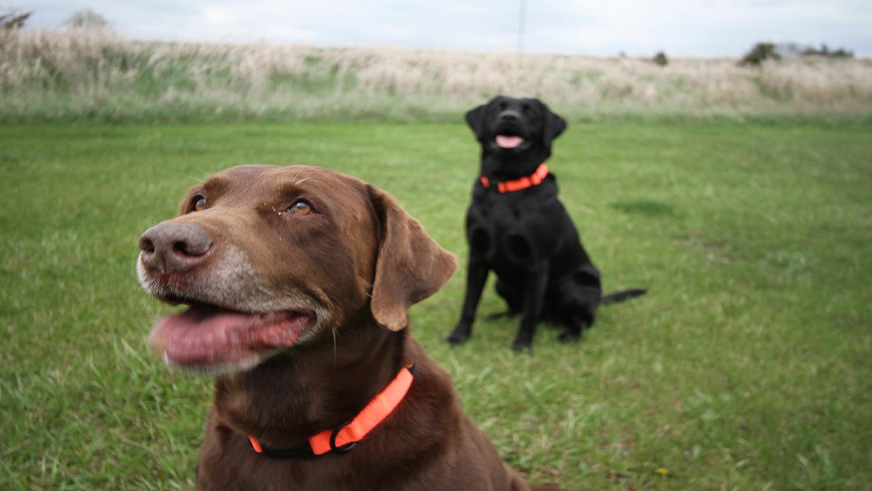 Top 10 Smartest Hunting Dog Breeds