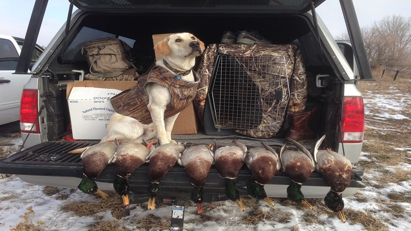 Is Your Four-Legged Friend Ready for Hunting Season?