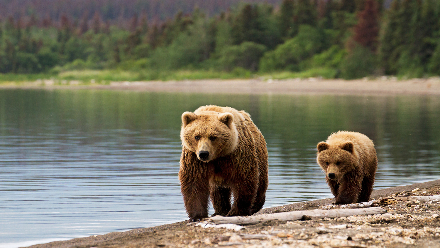 What You Need to Know About Bears...