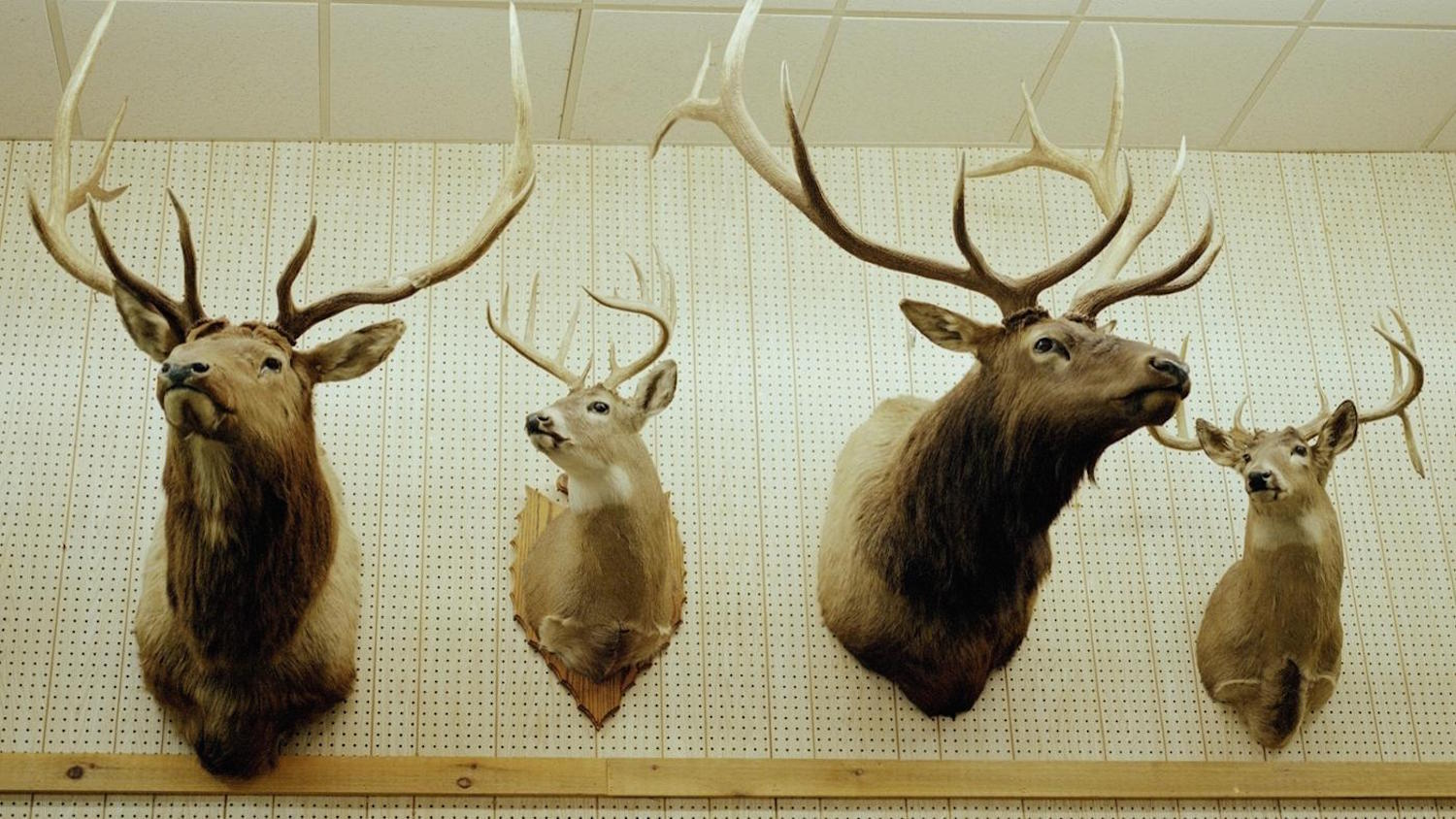 Types Of Taxidermy: Finding The Right Mount