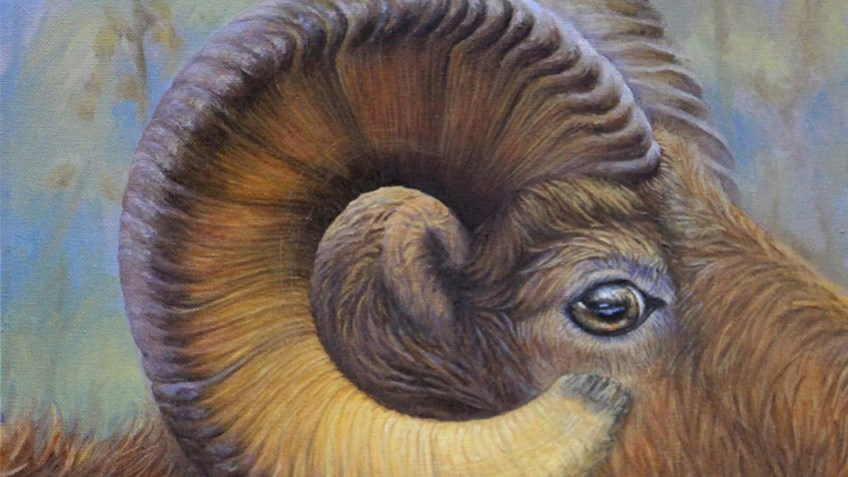 And the 2016 Youth Wildlife Art Contest Winners are...