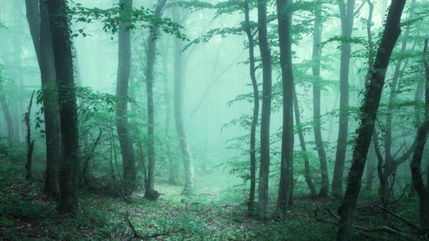 5 Scary Things People See Outdoors (& What to Do About Them)