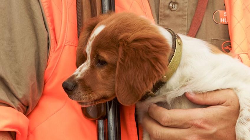 Gundogs: Puppy Primer