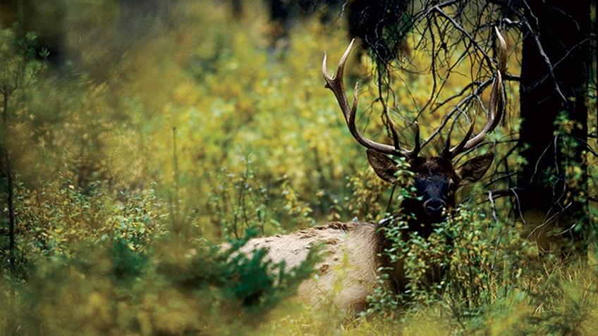 Hot Weather Elk Tactics