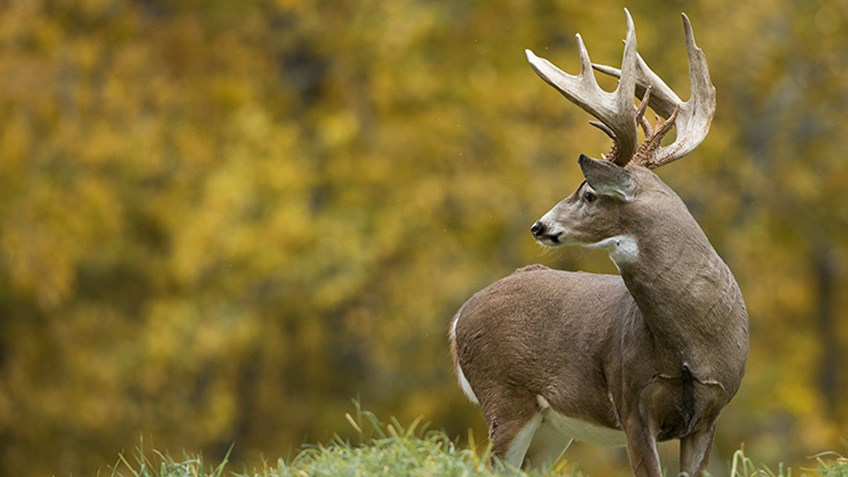 Top 10 States for Monster Whitetails