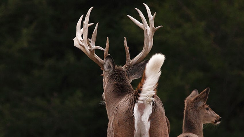 5 Buck Tips Straight from the Biologists