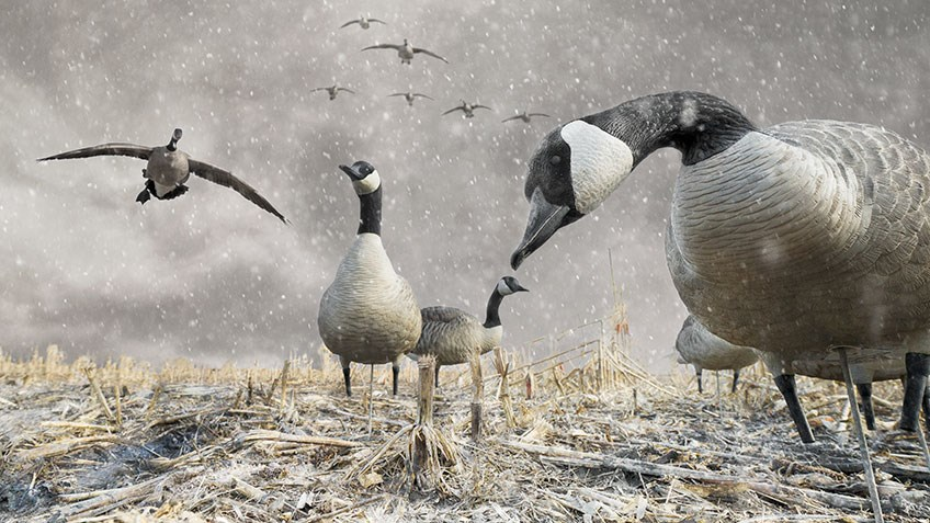 Tips and Tactics for Hunting Wary Waterfowl