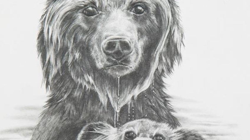 The 2019 George Montgomery/NRA Youth Wildlife Art Contest is now open